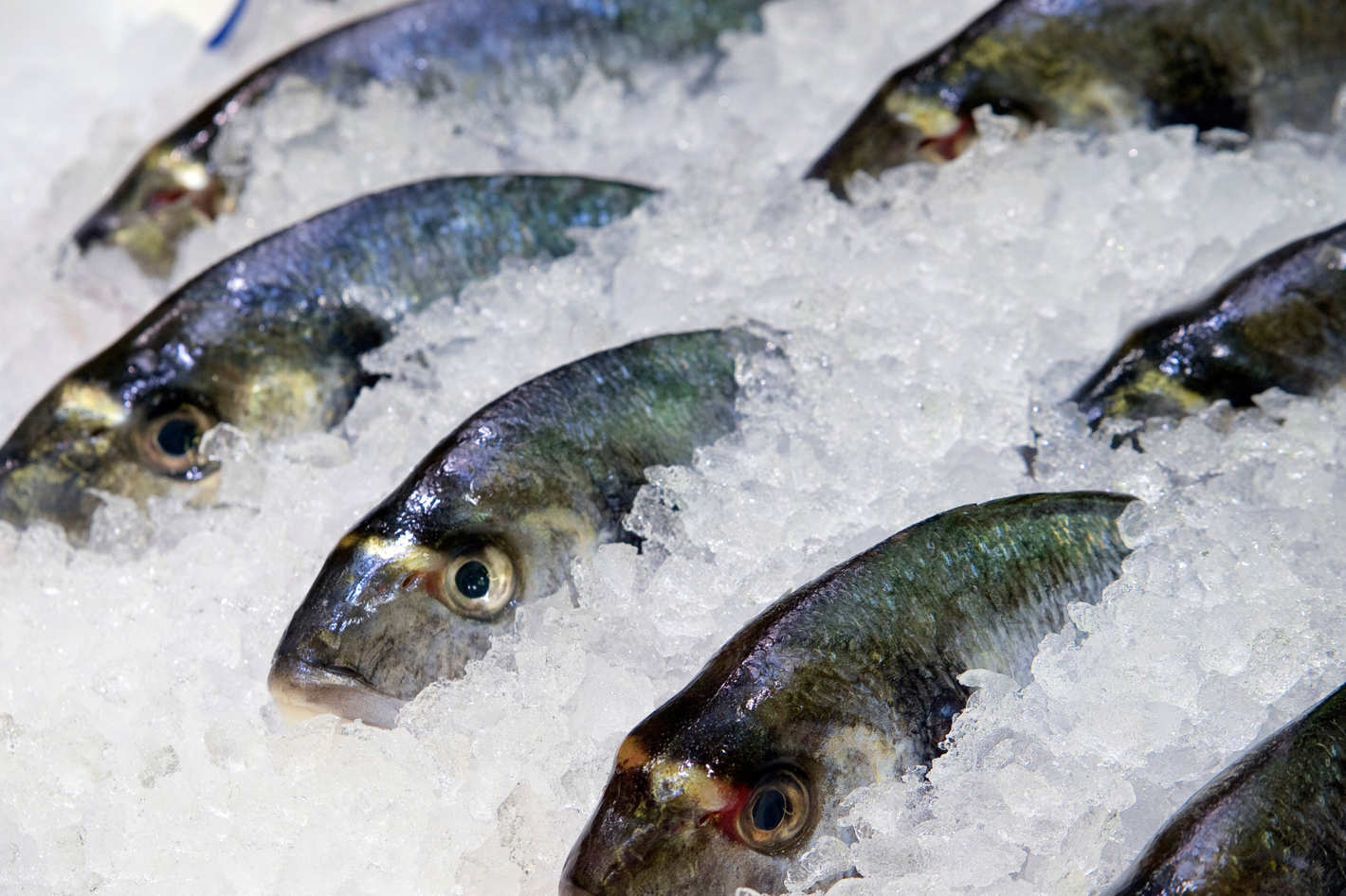 The Friday Five: So Long, and Thanks for All the Fish